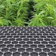 Marijuana e green economy