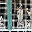 Vallo della LucaniaNotizie foto - 02102017 cani in parco rifugio