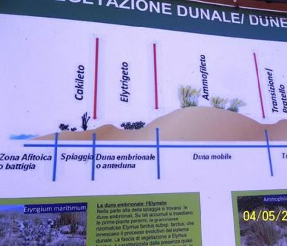 Paolo-Abbate foto - 05052017 grafico vegetazione dunale
