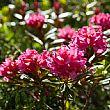 Ambiente foto - 06112016 rosa alpina