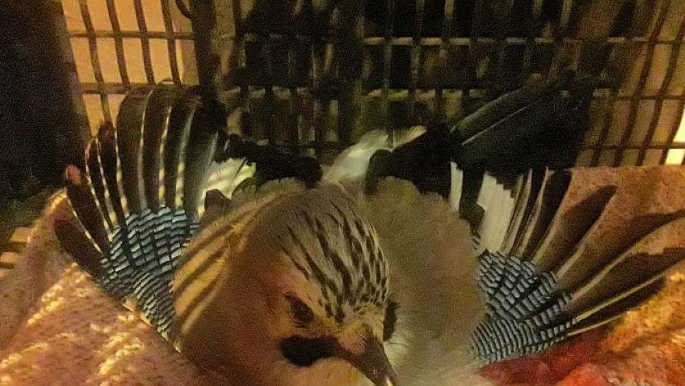 06112018 uccello controlli enpa