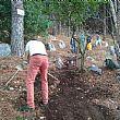 Comuni foto - 07092017 lavori manutenzione boschiva 2