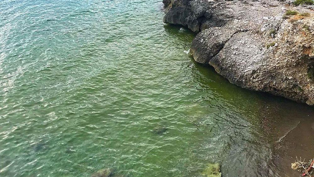 08082018 calanca fioritura alghe