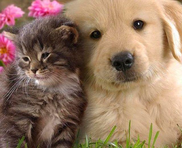 Lo studio: I cani e i gatti di oggi vivono il doppio rispetto a un secolo fa – Cilento Notizie
