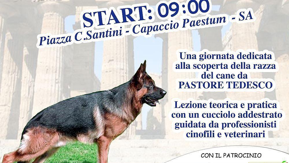 Capaccio Paestum Stage Dedicato Al Cane Pastore Tedesco Cilento