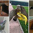 L'Enpa di Salerno soccorre diversi animali in difficolt�. Il primo intervento � essenziale