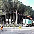 Capaccio PaestumNotizie foto - 11022017 interventi pineta capaccio