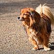 Comuni foto - 11042018 cani in luoghi pubblici