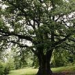Cronaca foto - 12052017 grande quercia