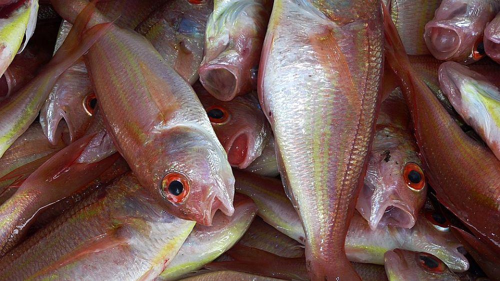 12092018 pesce