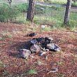 Cilento - Le ultime Notizie foto - 12102015 giornata ecologica vibonati