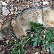 Vallo di DianoNotizie foto - 13022015 lupo ucciso