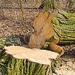 Cronaca foto - 13022017 cronaca taglio illecito alberi