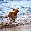 Cronaca foto - 13082014 cane in mare
