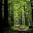 Cronaca foto - 13092016 bosco fitto