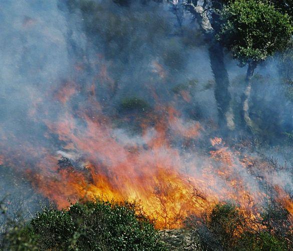 Giuseppe-Lembo foto - https://www.cilentonotizie.it/public/images/14082016 incendio