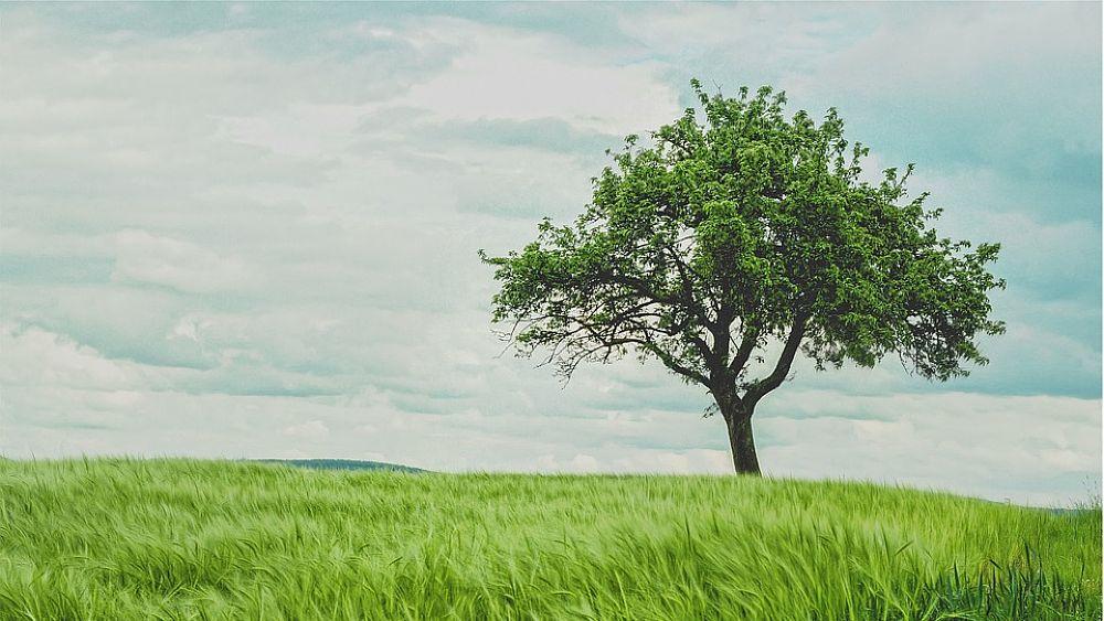14092018 albero prato