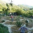 Cilento - Le ultime Notizie foto - 16102014 agricoltura sinergica