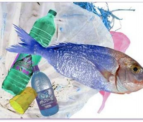 Marisa-Russo foto - 17052018 plastiche inquinamento