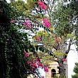 CastellabateNotizie foto - 18042017 foto castellabate
