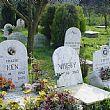 Comuni foto - 20112017 cimitero cani e gatti