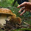 Cilento - Le ultime Notizie foto - 21122014 funghi art abbate su