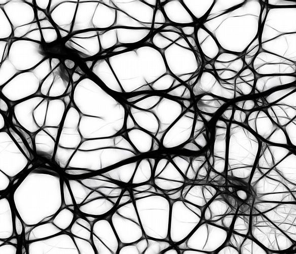 Giuseppe-Lembo foto - 22012018 cervello neuroni