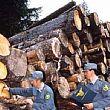 26022015 furto legna