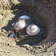 Ambiente foto - https://www.cilentonotizie.it/public/images/27072017 nido tartarughe