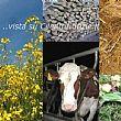 Cilento - Le ultime Notizie foto - 27092014 bio agro energia