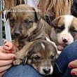 Cilento - Le ultime Notizie foto - 28062015 cuccioli abbandonati cilento
