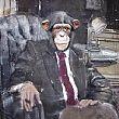 �La scimmia ambiziosa�, inedito di Felice Cesarino